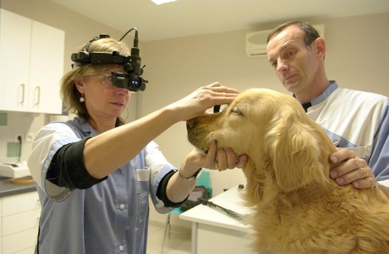 veterinaire avignon ophtalmologie veterinaire avignon veterinaire ophtalmo avignon chien chat. Black Bedroom Furniture Sets. Home Design Ideas